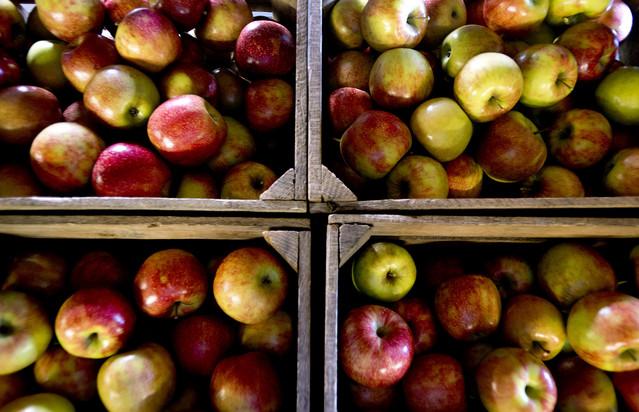 Hard Cider Apples